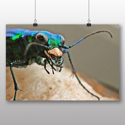 Big Box Art Tiger Beetle Graphic Art Wrapped on Canvas