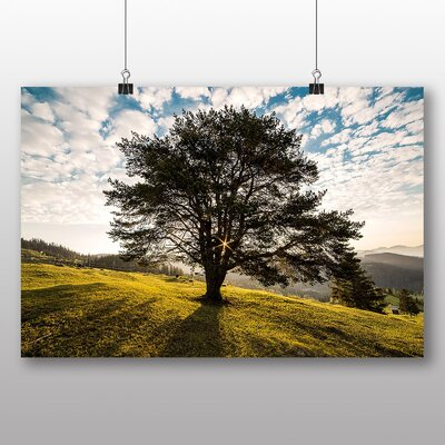 Big Box Art Tree Bucovenia Romainia Photographic Print on Canvas