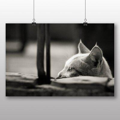 Big Box Art Peering Cat Photographic Print