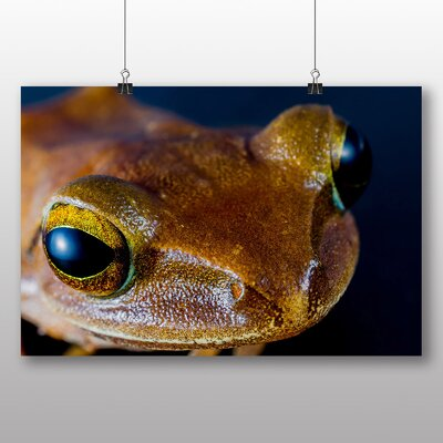 Big Box Art Tree Frog No.3 Photographic Print