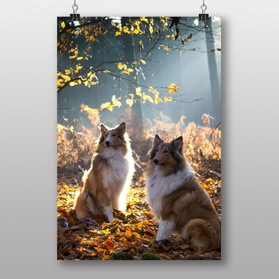 Big Box Art Two Rough Collie Dogs Photographic Print Wrapped on Canvas