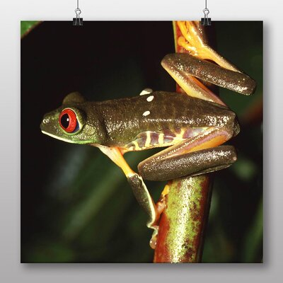 Big Box Art Red Eyed Leaf Frog Photographic Print Wrapped on Canvas