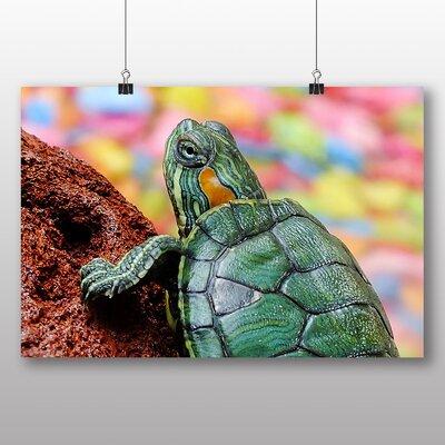 Big Box Art Turtle Photographic Print on Canvas