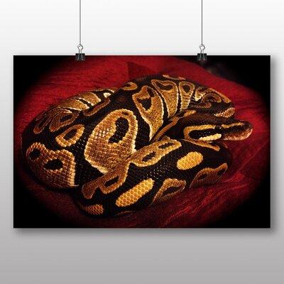 Big Box Art Python Snake No.4 Photographic Print on Canvas