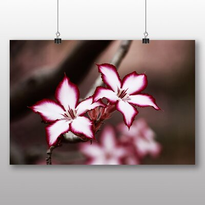 Big Box Art Pink Lily Flower Photographic Print Wrapped on Canvas