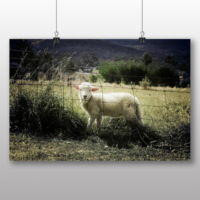 Big Box Art Sheep Lamb Photographic Print Wrapped on Canvas