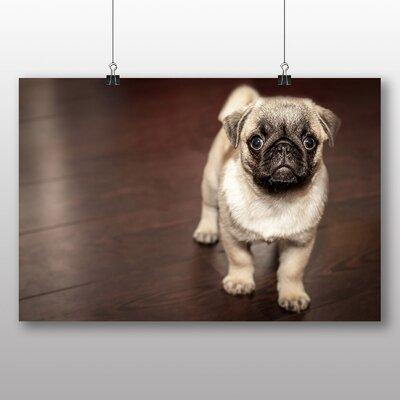 Big Box Art Pug Puppy Dog Photographic Print