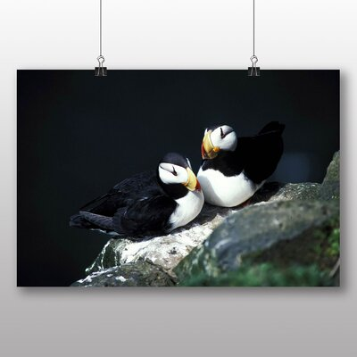 Big Box Art Puffins Photographic Print