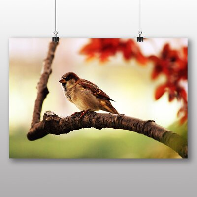 Big Box Art Sparrow No.5 Photographic Print