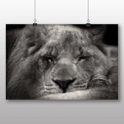 Big Box Art Sleeping Lion Photographic Print