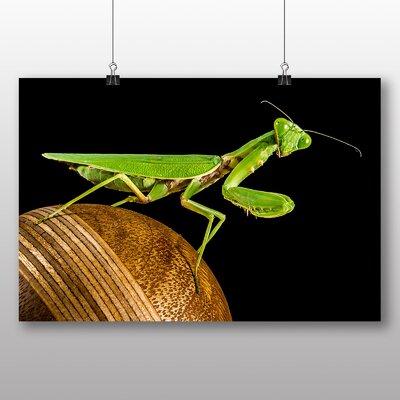 Big Box Art Praying Mantis Photographic Print