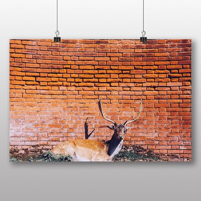 Big Box Art 'Resting Stag Deer' Photographic Print
