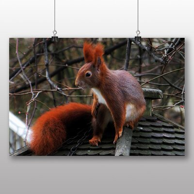 Big Box Art Red Squirrel No.4 Photographic Print Wrapped on Canvas
