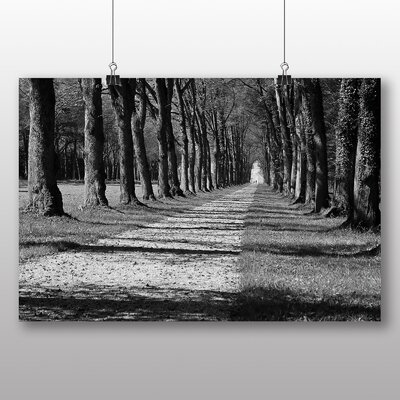 Big Box Art Oak Tree Path No.2 Photographic Print