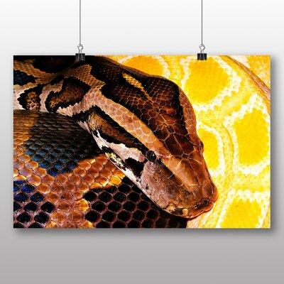 Big Box Art Python Snake No.3 Photographic Print