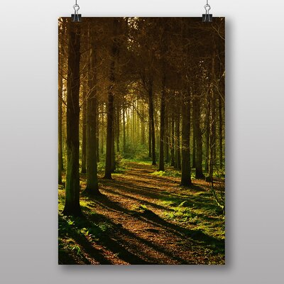 Big Box Art Sunlight Forest No.1 Photographic Print on Canvas