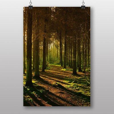 Big Box Art Sunlight Forest No.1 Photographic Print