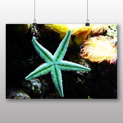 Big Box Art Starfish Graphic Art on Canvas