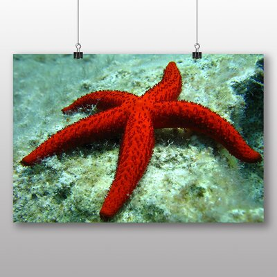 Big Box Art Starfish No.2 Photographic Print on Canvas