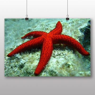 Big Box Art Starfish No.2 Photographic Print