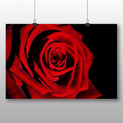 Big Box Art Rose Flower No.11 Photographic Print