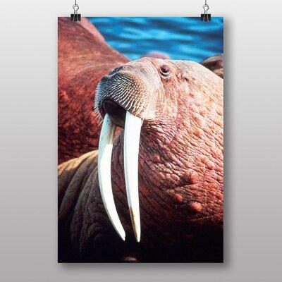 Big Box Art Walrus Photographic Print Wrapped on Canvas