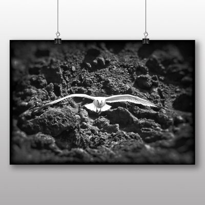 Big Box Art Seagull No.2 Photographic Print