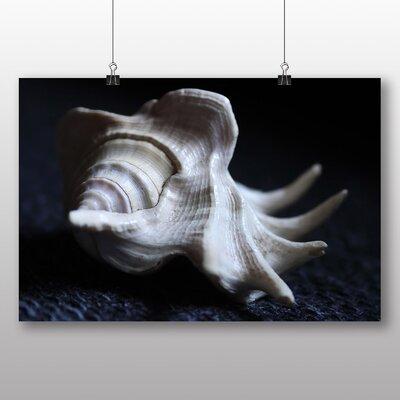 Big Box Art Seashell Shell No.2 Photographic Print