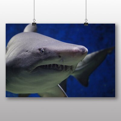 Big Box Art Shark Photographic Print Wrapped on Canvas