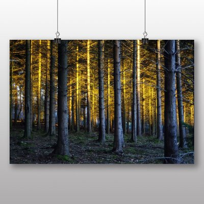 Big Box Art Sunlight Forest No.14 Photographic Print