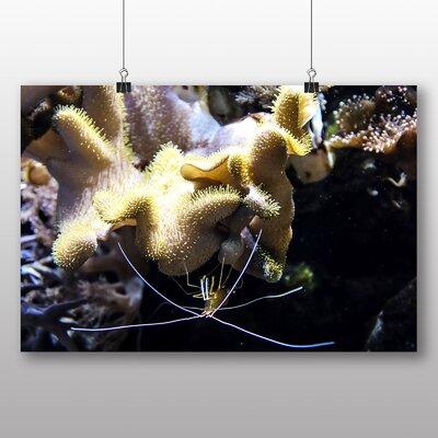 Big Box Art Shrimp Plankton Photographic Print