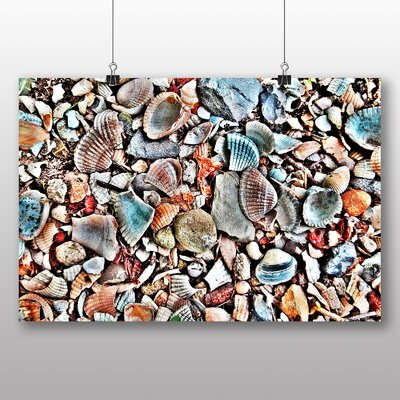Big Box Art Shells No.3 Photographic Print Wrapped on Canvas