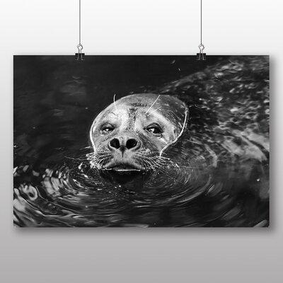Big Box Art Sea Lion No.4 Photographic Print