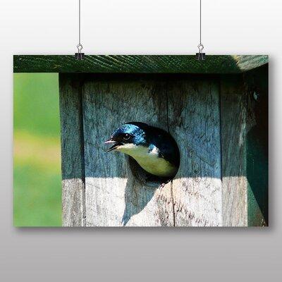 Big Box Art Swallow Photographic Print on Canvas
