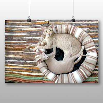 Big Box Art Siamese Cat Photographic Print Wrapped on Canvas
