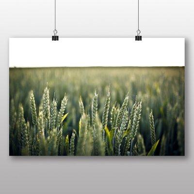 Big Box Art 'Summer Reeds No.2' Photographic Print
