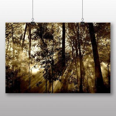 Big Box Art Sunlight Forest No.2 Photographic Print