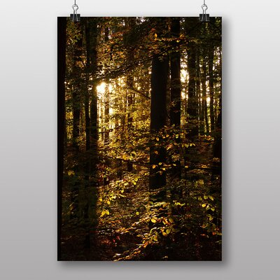 Big Box Art Sunlight Forest Wood No.3 Photographic Print Wrapped on Canvas
