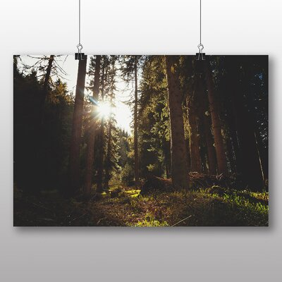 Big Box Art Sunlight Peering Through Forest Photographic Print
