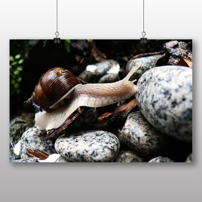 Big Box Art Snail No.4 Photographic Print