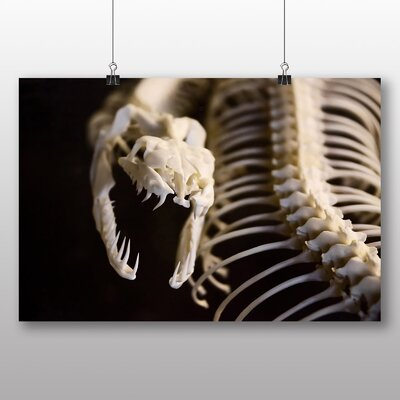 Big Box Art Snake Skeleton Photographic Print Wrapped on Canvas
