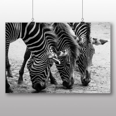 Big Box Art Zebras No.3 Photographic Print Wrapped on Canvas