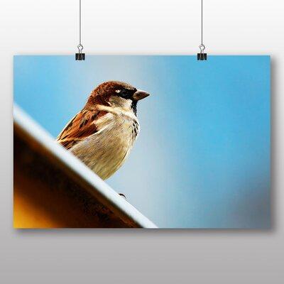 Big Box Art Sparrow No.4 Photographic Print