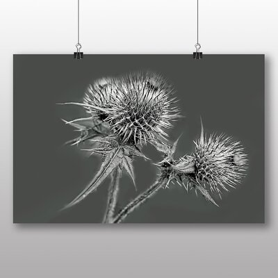 Big Box Art Thistle Flower No.2 Photographic Print