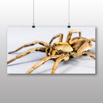 Big Box Art Spider No.4 Photographic Print Wrapped on Canvas