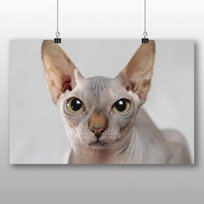 Big Box Art Sphynx Cat Photographic Print
