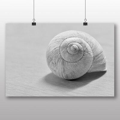 Big Box Art Snail Shell No.2 Photographic Print