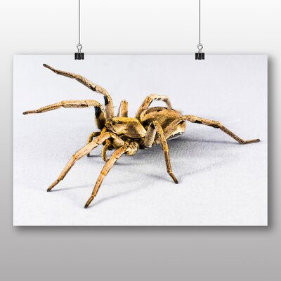 Big Box Art Spider No.5 No.1 Photographic Print