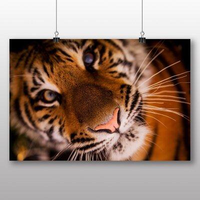 Big Box Art Tiger No.2 Photographic Print Wrapped on Canvas