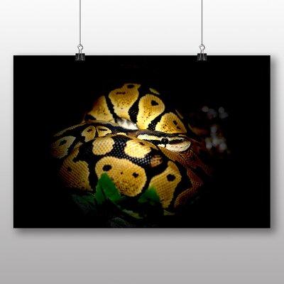 Big Box Art Python Snake No.2 Photographic Print